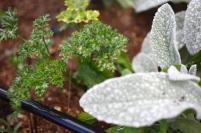 Plantio de ervas medicinais. Foto: Nidim Sanches